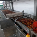 Another farm in Russia with a robotic sorting and packing process for apples