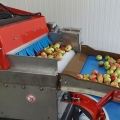 A new sorting line for apples in Moldova