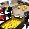 Why choosing an electronic apple sorting line with a MONO machine is a good idea?